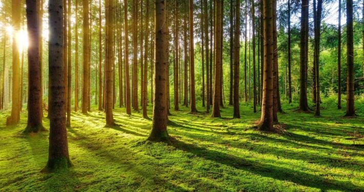 Bäume werfen Schatten